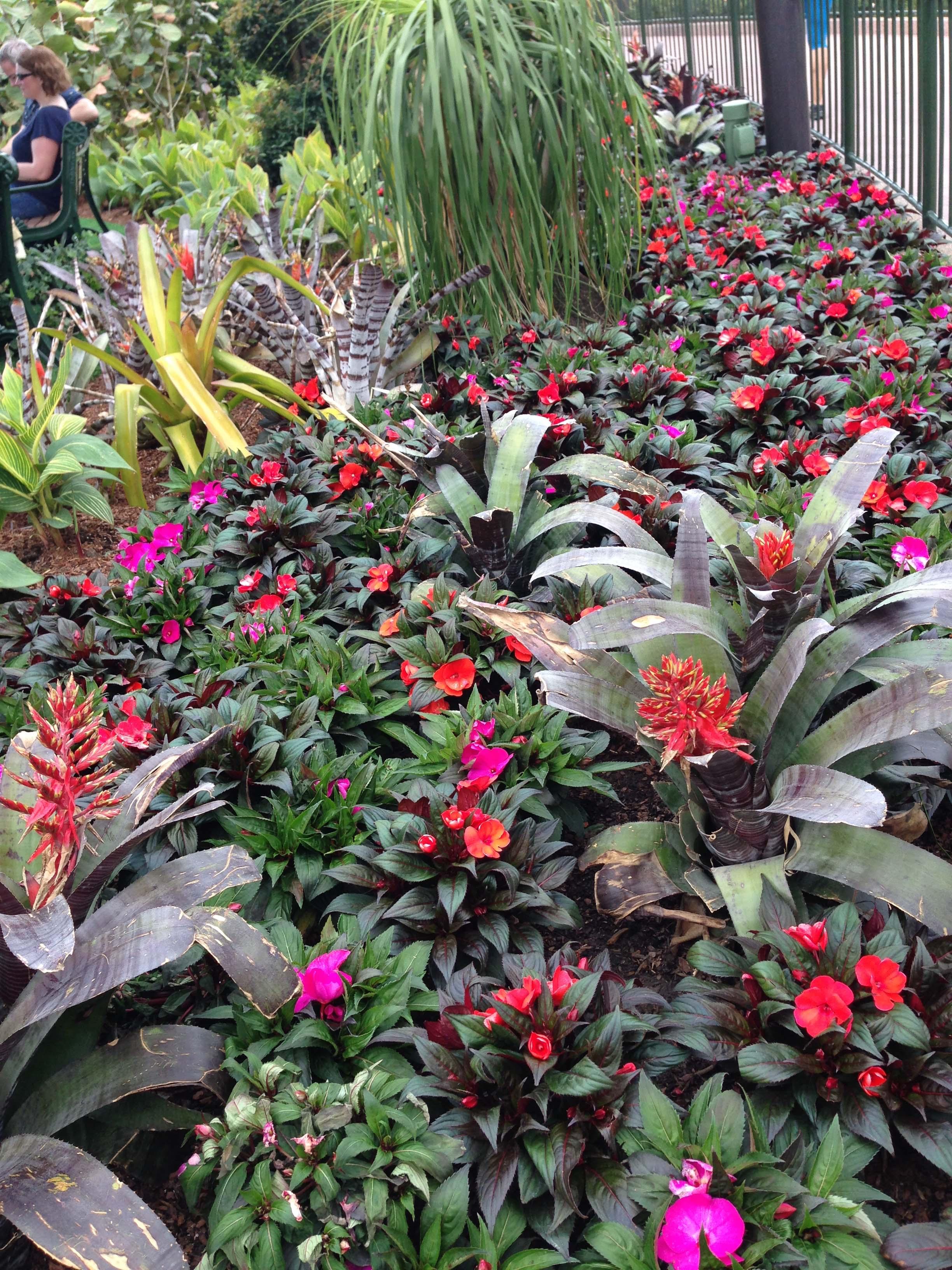 Disney's Epcot Flower Show 2015 – VanDyke Gardens