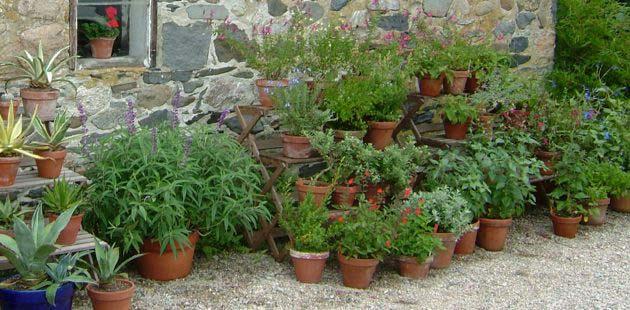 14 Garden Tips And Tricks Vandyke Gardens