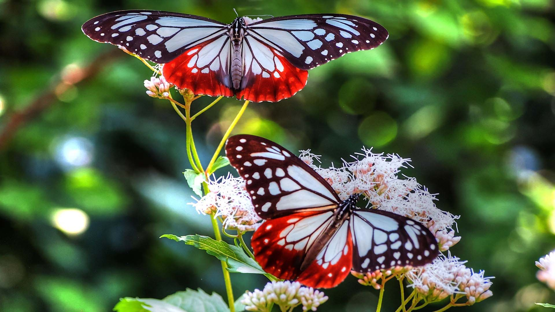 Which Plants Attract Butterflies – VanDyke Gardens